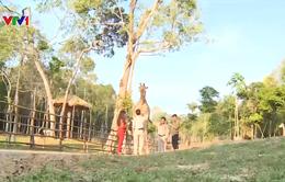 Buổi sáng ở vườn thú lớn nhất Việt Nam