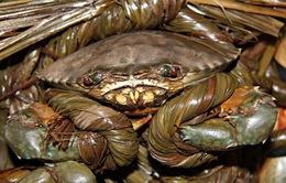 Trà Vinh: Giá cua biển giảm mạnh