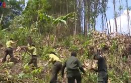 Quảng Nam tăng cường phòng chống cháy rừng