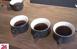 Những ly cà phê đắt nhất thế giới ở California, Mỹ