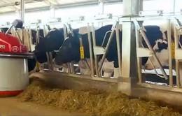 Minh bạch sản xuất - khuyến khích chương trình Sữa học đường