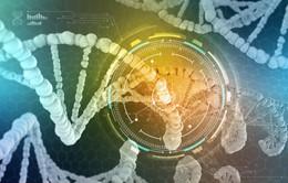 Phát hiện protein ở gan gây bệnh béo phì