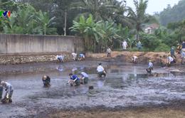 Thanh Hóa: Nguy cơ ô nhiễm môi trường từ nhà máy mía đường