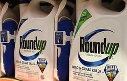 Monsanto tiếp tục phải bồi thường hơn 2 tỷ USD: Liệu đây có phải án lệ?