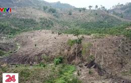 Tận mắt chứng kiến cảnh tàn phá rừng phòng hộ Đắc Cơ