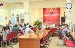 Agribank dành gần 1.200 tỷ đồng hỗ trợ doanh nghiệp lúa gạo