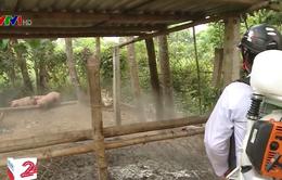 Cà Mau ra quân lập các chốt, trạm kiểm soát dịch tả lợn châu Phi