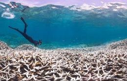 Hy vọng hồi sinh các rặng san hô đang chết dần