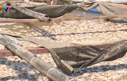 Cá làng bè lại chết trắng trên sông La Ngà, Đồng Nai