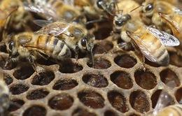Dự án nuôi ong lấy mật trong nhà tù Đức
