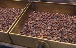 Truy xuất nguồn gốc cà phê qua mã số vùng trồng