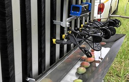 Australia thử nghiệm thành công robot hái xoài