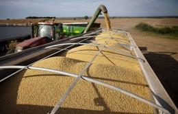 Nông dân trồng đậu tương Mỹ thất vọng về triển vọng đàm phán