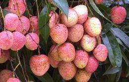 Trung Quốc ra khuyến cáo với quả vải xuất khẩu từ Việt Nam