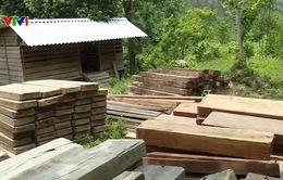 Quảng Bình: Làm rõ việc phát hiện số gỗ lậu tại UBND xã