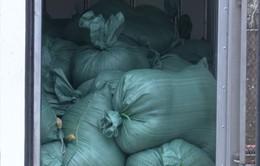 Nghệ An: Bắt vụ vận chuyển 2 tấn nội tạng động vật đã bốc mùi