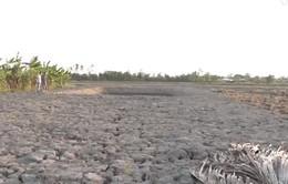 Cà Mau: Mặn xâm nhập, hạn khốc liệt