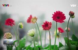 Ghé thăm phố cây cảnh Hoàng Hoa Thám