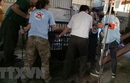 Nghệ An: Chuyển giao 3 cá thể gấu bị nuôi nhốt trái phép sau gần 2 tháng phát hiện vi phạm