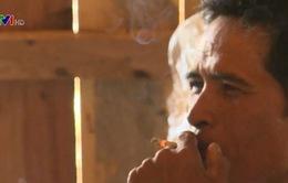 Thuốc lá đang phá hủy lá phổi của con người
