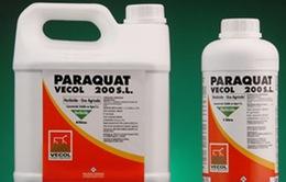 Liên tiếp bệnh nhân ngộ độc thuốc diệt cỏ Paraquat nhập viện