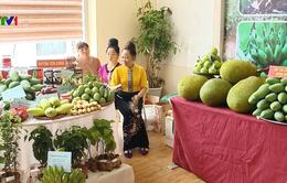 Liên kết phát triển bền vững trái cây các tỉnh phía Bắc