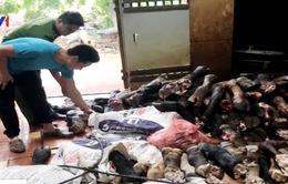 Hà Nội: Thu giữ gần 3 tấn nội tạng động vật nhập lậu