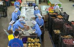 Rau Đà Lạt tăng giá mạnh do thiếu hụt nguồn cung hàng