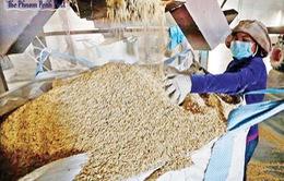 Xuất khẩu gạo của Campuchia sang Trung Quốc tăng mạnh