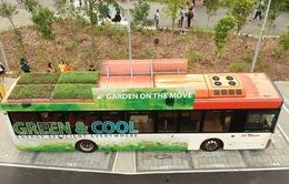 Khu vườn trên nóc xe buýt ở Singapore