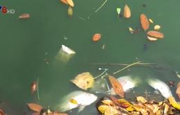 Ô nhiễm công viên 29/3 tại Đà Nẵng do chậm xử lý nước thải