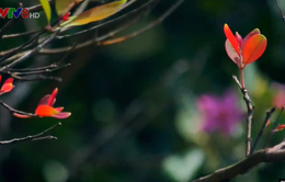 Sơn Trà: Mùa rừng thay lá