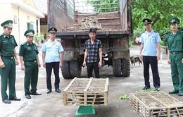 Bắt giữ hơn 400 kg mèo nhập lậu tại Quảng Ninh