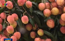 Sản lượng xuất khẩu nông sản Việt Nam sang Trung Quốc giảm mạnh