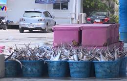 Thái Lan cấm đánh bắt cá 3 tháng trên Vịnh Thái Lan