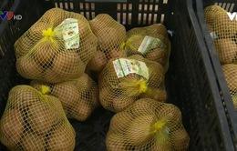 Lâm Đồng: Gỡ vướng cho gắn nhãn mác khoai tây Đà Lạt