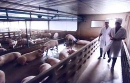 Thái Lan đẩy mạnh phòng chống tả lợn châu Phi