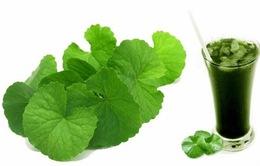Một số tác dụng của rau má đối với sức khỏe