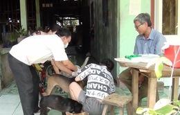 Cà Mau: Tăng đột biến số ca tử vong do bệnh dại