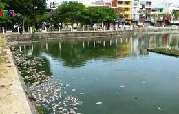 Cá chết hàng loạt trên hồ Thạc Gián, Đà Nẵng
