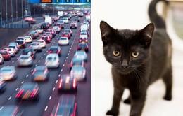 Chú mèo con sống sót thần kỳ bỗng nổi tiếng mạng xã hội