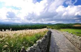 Khám phá 3 điều tuyệt vời nhất tại Jeju - Hàn Quốc vào mùa hè này