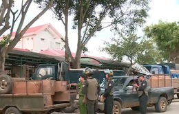 Đắk Lắk: Truy bắt nhóm vận chuyển gỗ trái phép vùng giáp ranh