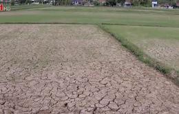 Thiếu nước tưới đầu vụ Hè Thu tại các hồ chứa khu vực miền Trung