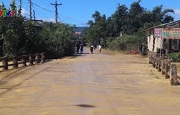 Lâm Đồng: Lũ lớn làm ngập hàng trăm ha cây trồng chìm trong biển nước