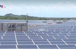 Ninh Thuận: Nhà máy điện mặt trời Thuận Nam 19 hòa lưới điện quốc gia