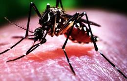 Đắk Nông: Tập trung phòng, chống bệnh sốt xuất huyết Dengue