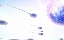 Tinh trùng đông lạnh có thể sống ngoài không gian