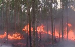 Cháy rừng tại Phú Yên
