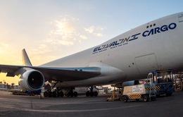 Boeing chở khách hạ cánh khẩn vì chim đâm vào động cơ
